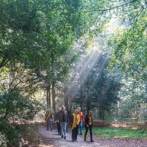 houtmoed wandelen in de zon