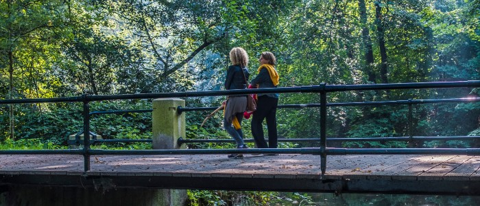 houtmoed lopen over brug