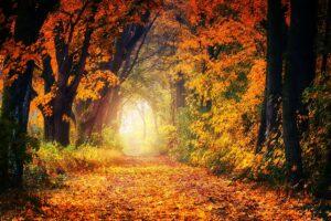 Houtmoed blog herfstbladeren